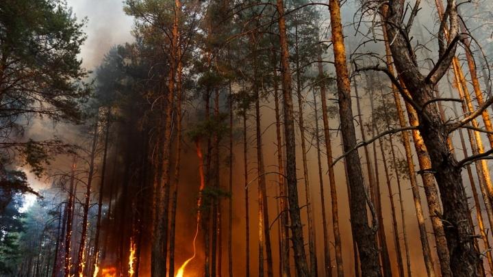 «Лес тушим руками»: как выглядит гигантский пожар в Тарасовском районе. Фоторепортаж 161.RU