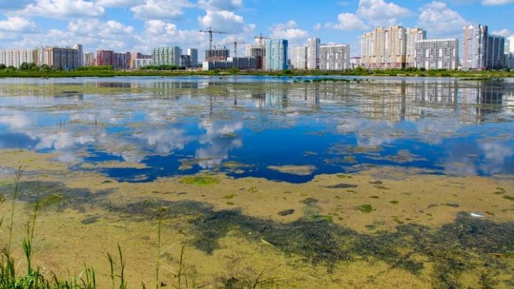 «В приступах любви мы его чморим»: журналист 74.RU — о несправедливой критике Челябинска
