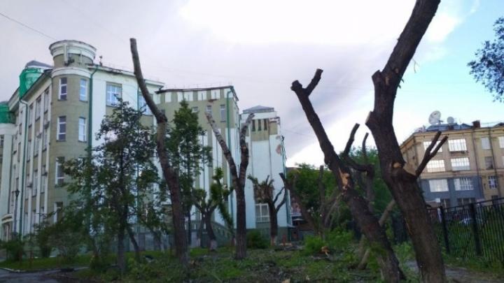 В мэрии рассказали о судьбе сквера у Университета водного транспорта, где спилили деревья