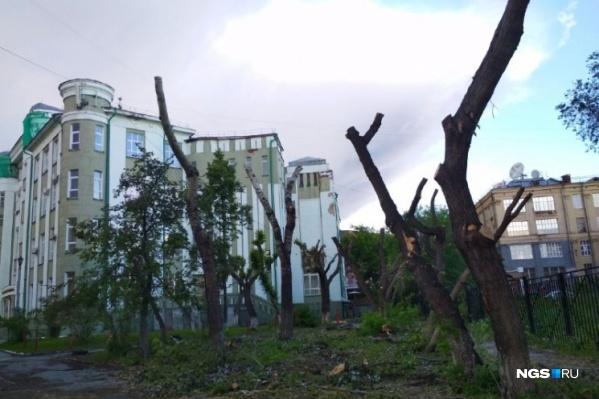 Так сейчас выглядят деревья в сквере