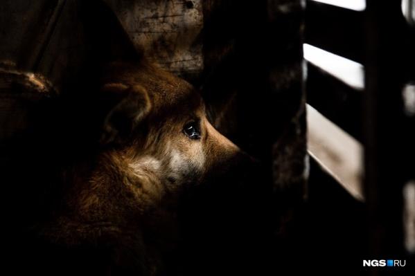В ситуации с отловом бродячих собак в Челябинске творился полный мрак с начала года