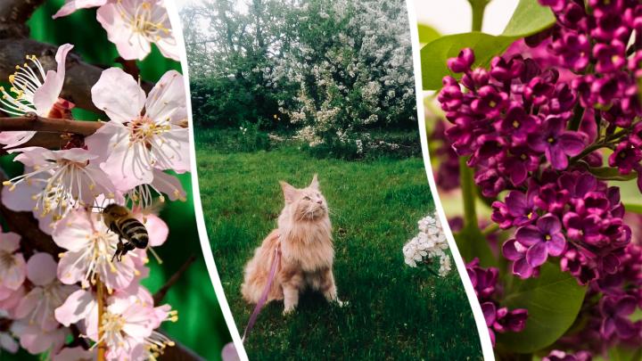 Буйство красок: любуемся фотографиями цветущей Самары