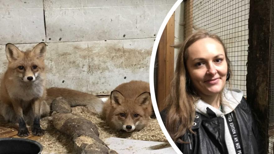 В Архангельске приют для диких животных и птиц «Мата-мата» остался без здания — видео