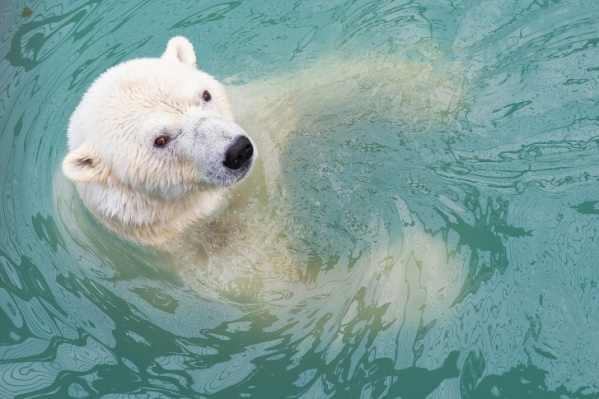 Медведица прожила в нашем зоопарке 10 лет, но так и не смогла стать мамой
