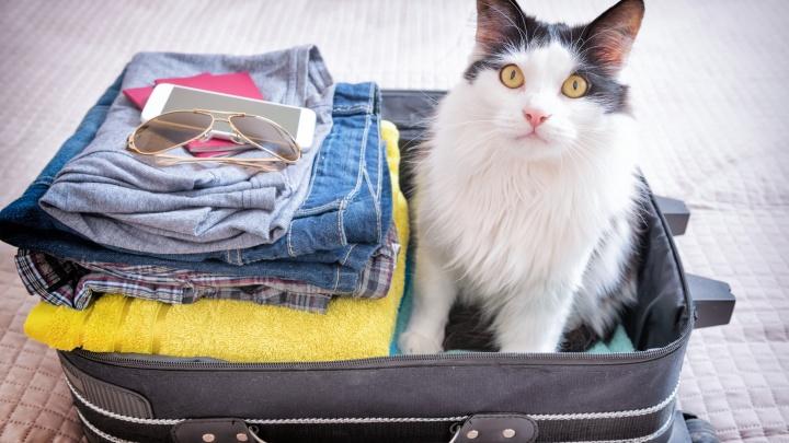 Пусть соседи отдохнут: обзор плюсов гостиницы для животных на примере BookingCat
