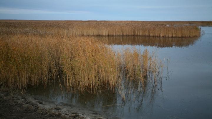 На новосибирских озёрах резко выросло число дичи — в Минприроды объяснили, с чем это связано