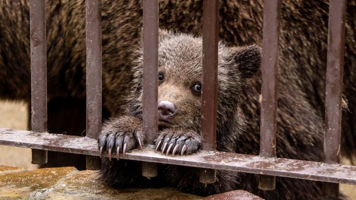 В Нижегородской области открываются зоопарки, музеи и библиотеки