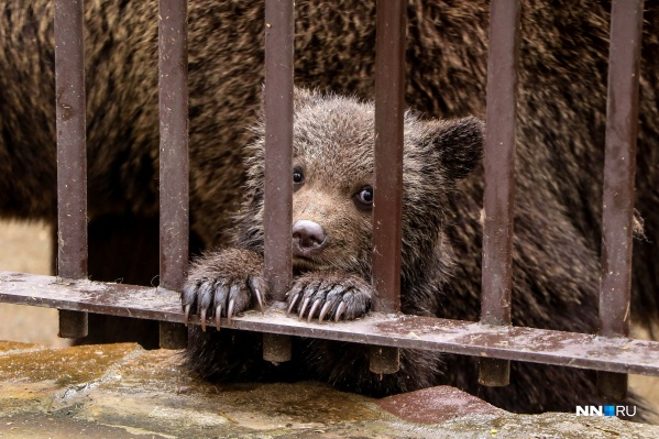 Посетить зоопарк можно будет уже с завтрашнего дня