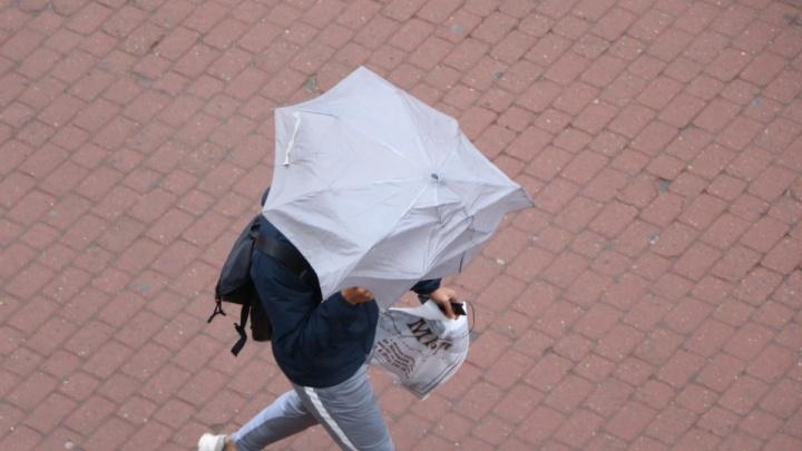 МЧС предупреждает нижегородцев о сильном ветре с дождём