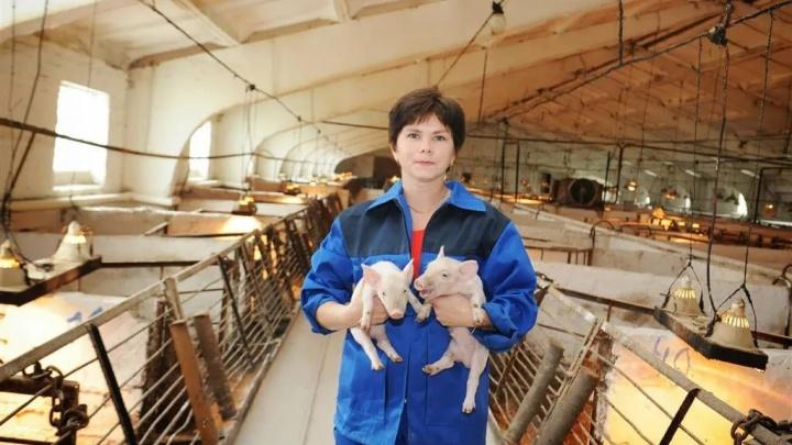 ЧС набирает масштабы: в самарском совхозе 17000 свиней заболели чумой