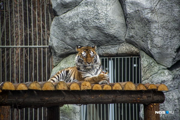 Некоторые животные успешно самоизолировались и пока отдыхают от непрекращающихся вспышек фотокамер