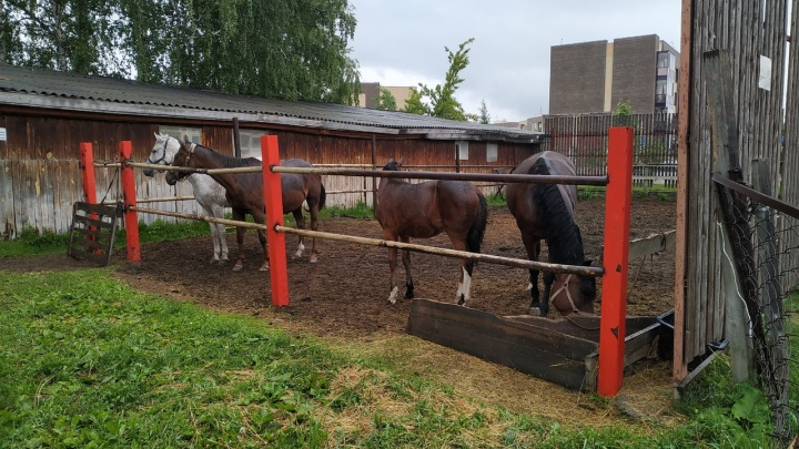 Ситуация с коронавирусом в России достигла плато (онлайн-хроника)