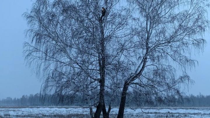 «Медуза» и Esquire включили в список лучших снимки омского фотографа