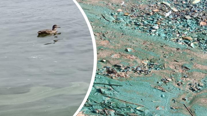 Волга становится химозно-синей: ярославцы жалуются на странные пятна вдоль берегов реки