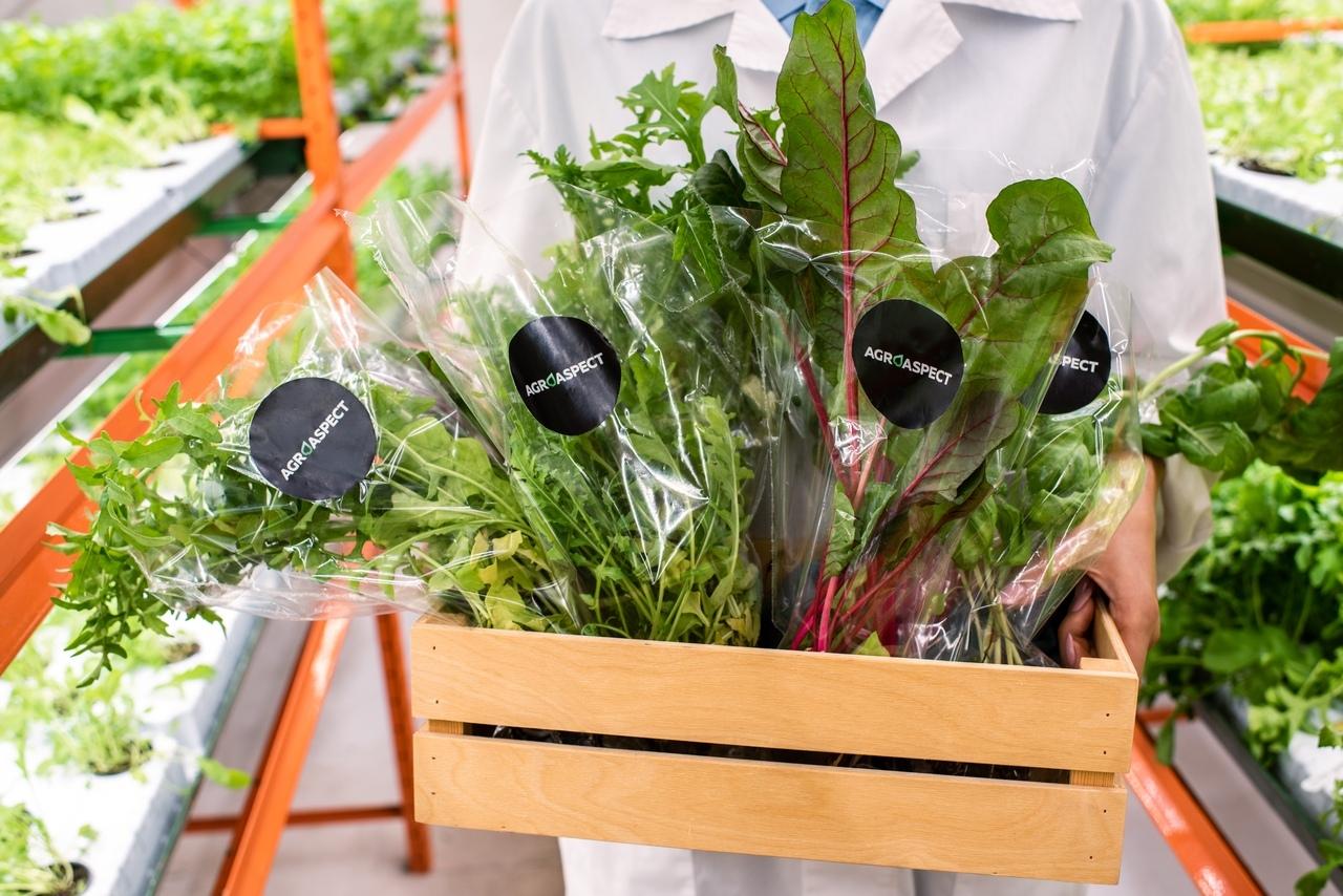 Разные виды зелени можно выращивать на одной «грядке» вместе с цветами или ягодами