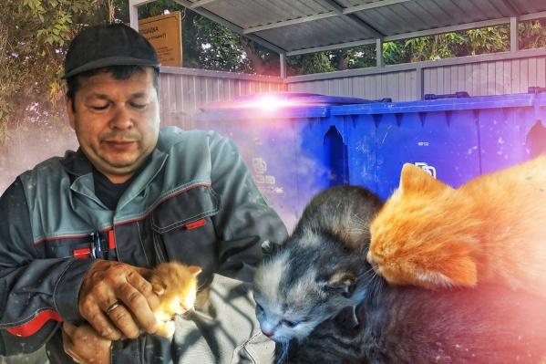 Котятам теперь ищут новый дом