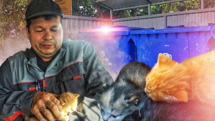 Два серых и два рыжих: в Тюмени водитель мусоровоза спас котят, которых выкинули на помойку