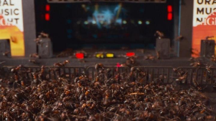 Ползем танцевать: в Екатеринбурге музыканты сыграют перед муравьями. Нет, это не шутка