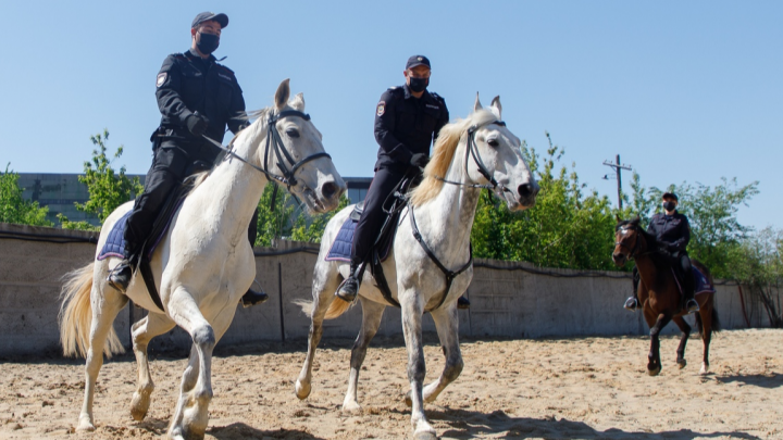 Любовь — и немного морковки: как живут кавалерийские лошади волгоградской полиции