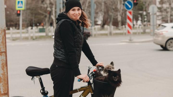 «Хозяин, что ты делаешь, прекрати»: фоторепортаж с улиц, где стало слишком много тюменцев с собаками