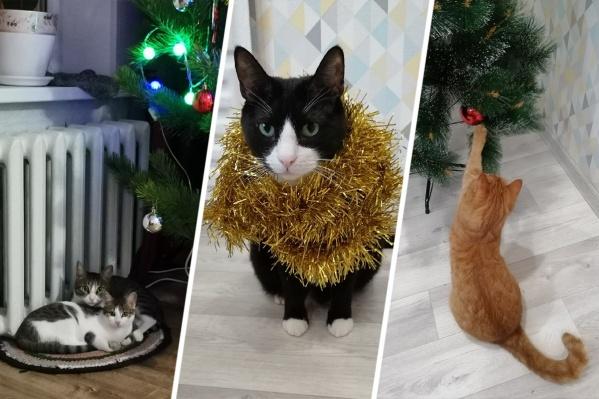 Праздник к нам приходит... в образе котиков!