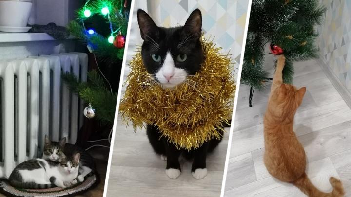 Потрошители елок и инопланетяне в мишуре: разглядываем новогодние фотографии котиков