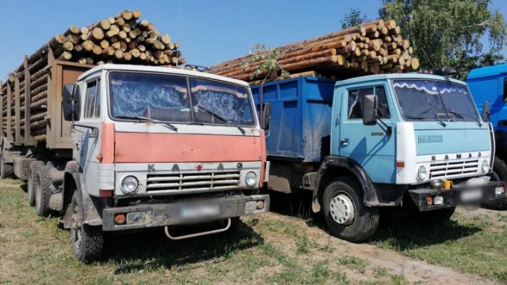 В Зауралье у перевозчиков древесины изъяли КАМАЗы и груз