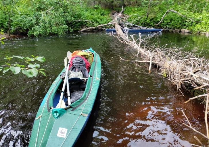 Самым главным препятствием на реке оказались множественные завалы из упавших деревьев и веток