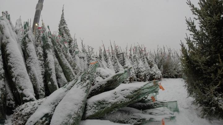 Стерлитамакский похититель Рождества: у жителя Башкирии в преддверии Нового года похитили елку