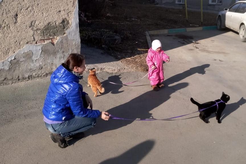 Рыжая кошка — Соня