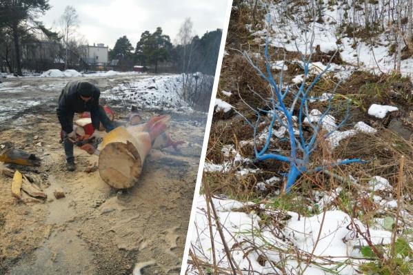 Разноцветное дерево спилили 1 ноября, это вызвало возмущение местных жителей
