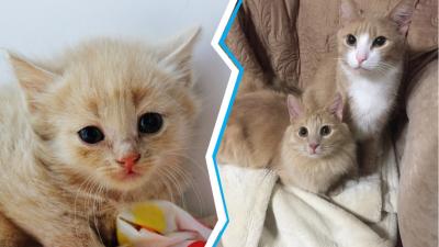 Трогательные истории пермских котиков, которых спасли и полюбили. Фото до и после