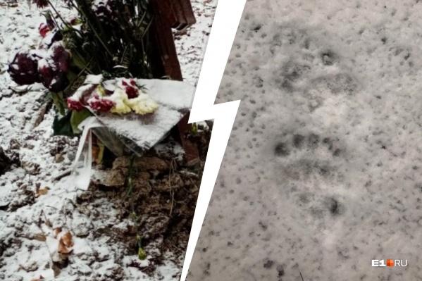 Следы медведей видели в Нижнем Тагиле и Краснотурьинске