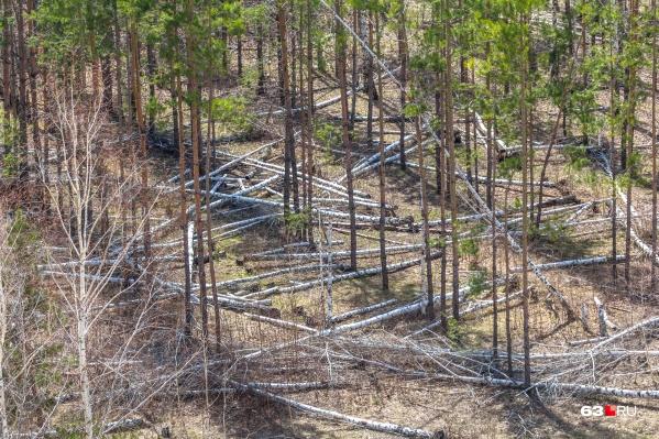 Охота в лесу разрешена только в определённых местах