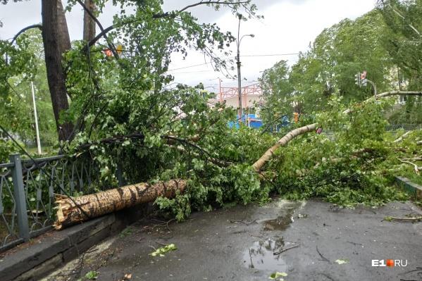 Дерево попало в машину, когда в ней ехала семья с беременной девушкой
