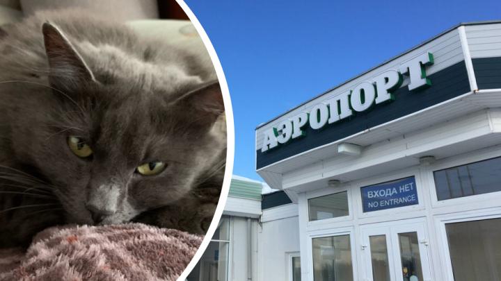 Удравшего из самолёта в ярославском аэропорту кота Кузю нашли наполовину