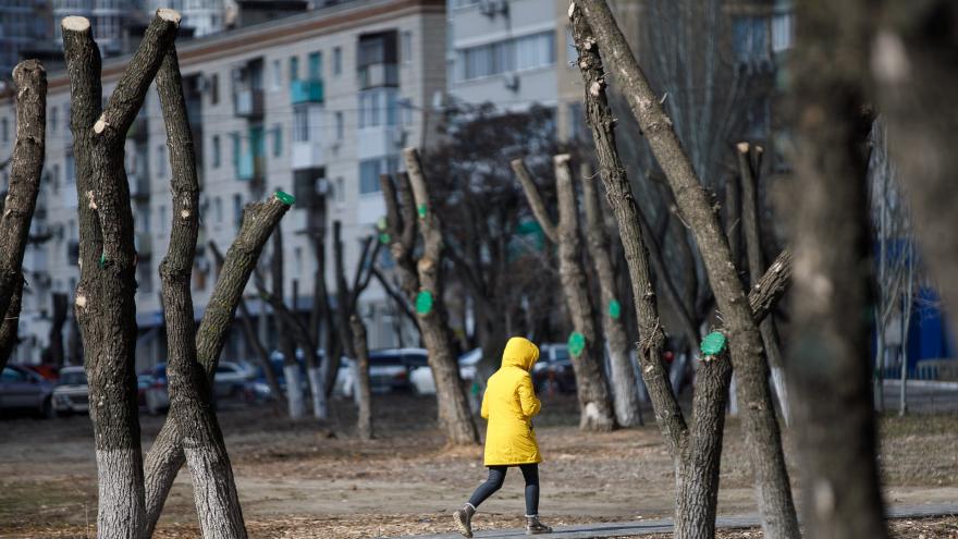 Зима попрощается с Волгоградской областью крепким ветром при +8 ºС
