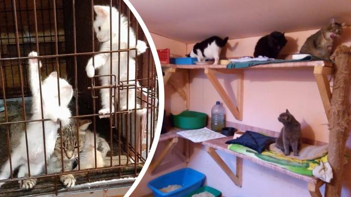 «У людей просто нет денег». Приюты для животных накрыла волна безденежья — кошек и собак нечем кормить