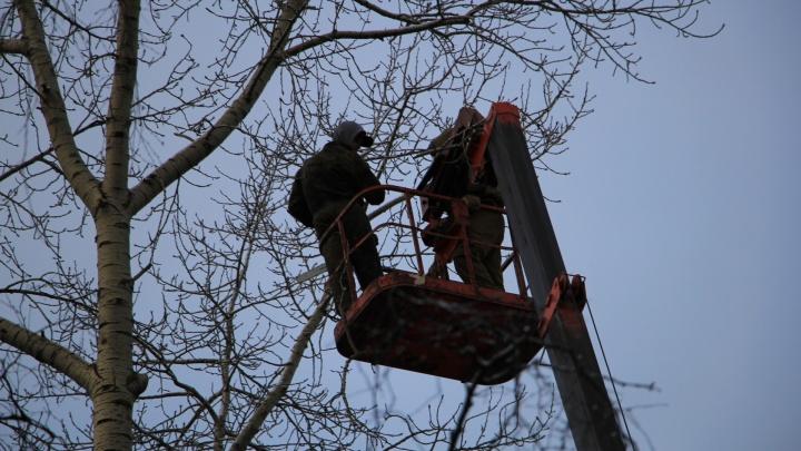 Администрация Архангельска потратит более миллиона рублей на свод 224 деревьев