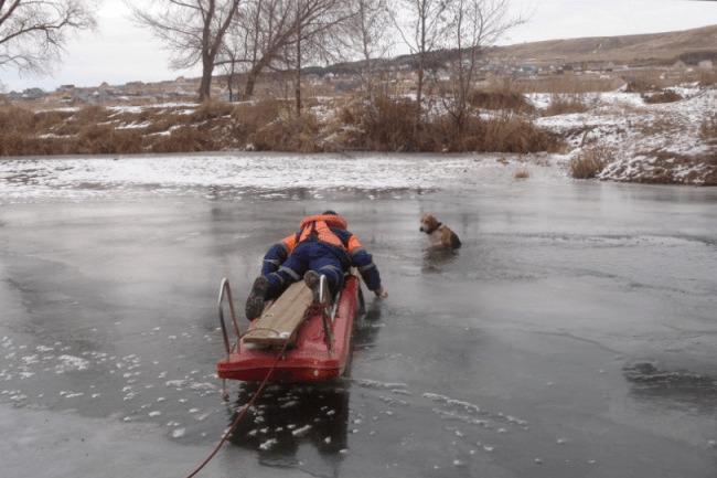 В Башкирии спасатели достали из воды собаку, провалившуюся под лед