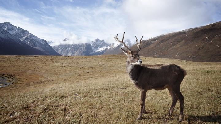 Исчезающие виды арктических птиц, рыб и животных попали в «Красную книгу» Эвенкии