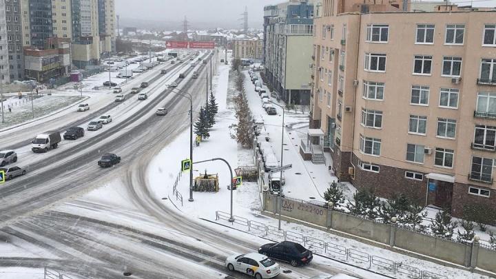 Челябинск завалило снегом. Смотрим на заметенные улицы и ошарашенных животных в Instagram