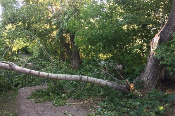 Деревья приняли на себя весь удар
