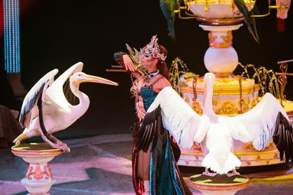 Звезды «Королевского номера» — розовые пеликаны из райского сада