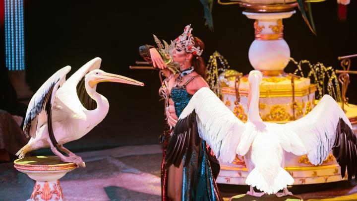 «Мы приехали удивлять»: почему нельзя пропустить гастроли «Королевского цирка» в Самаре