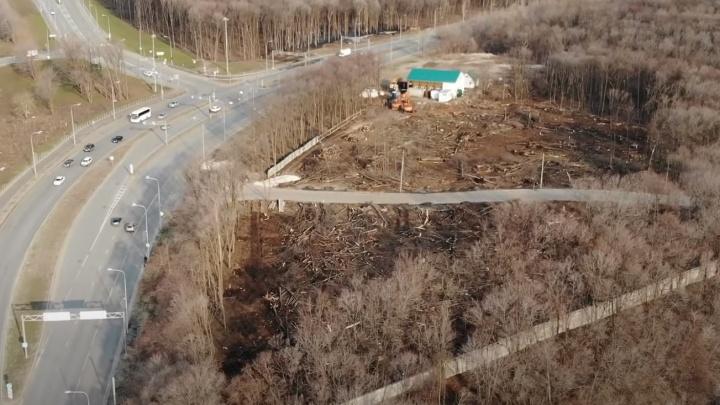 «А ведь это легкие города»: блогер снял на видео, как вырубают деревья у «Самара Арены»