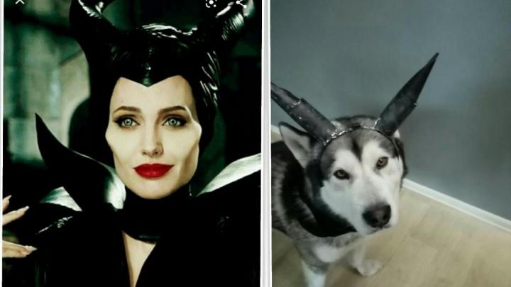 #изоизоляция по-собачьи: екатеринбуржцы переодели своих любимцев в Малефисенту, Шнурова и Гарри Поттера