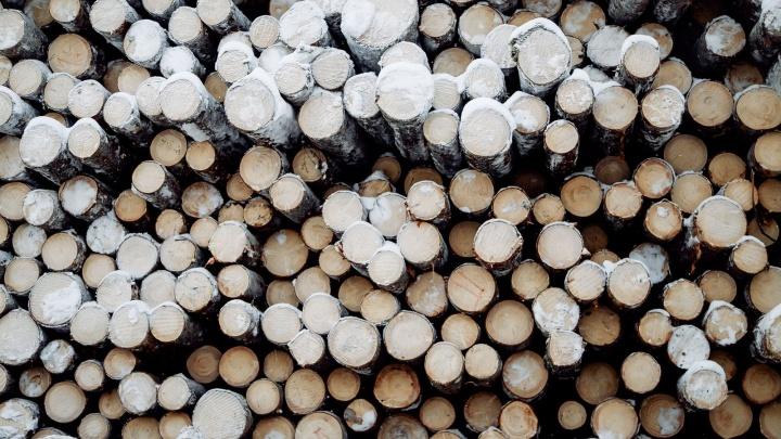 Лесопромышленники Поморья поддержали экологическую акцию «Час Земли»
