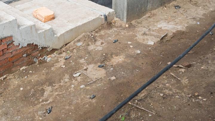 «Могли врезаться в здание»: в Перми заметили десятки мертвых птиц