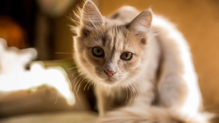 13 несчастных котиков, уставших от хозяев на самоизоляции (ваш кот так же на вас смотрит?)